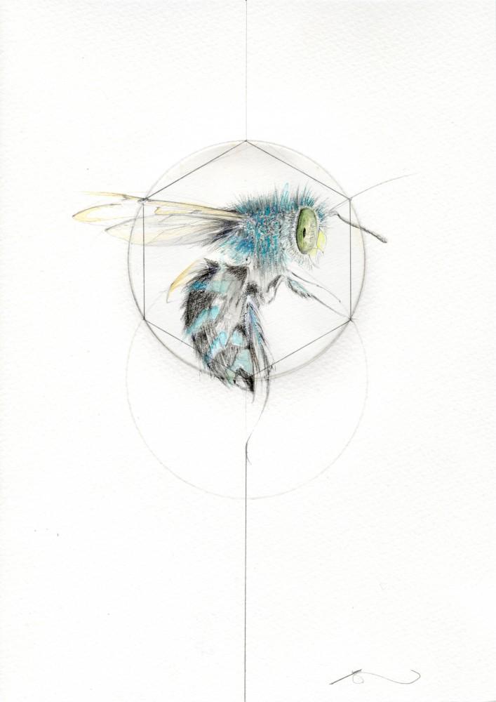 BLUE BEE (MEADOW SERIES)