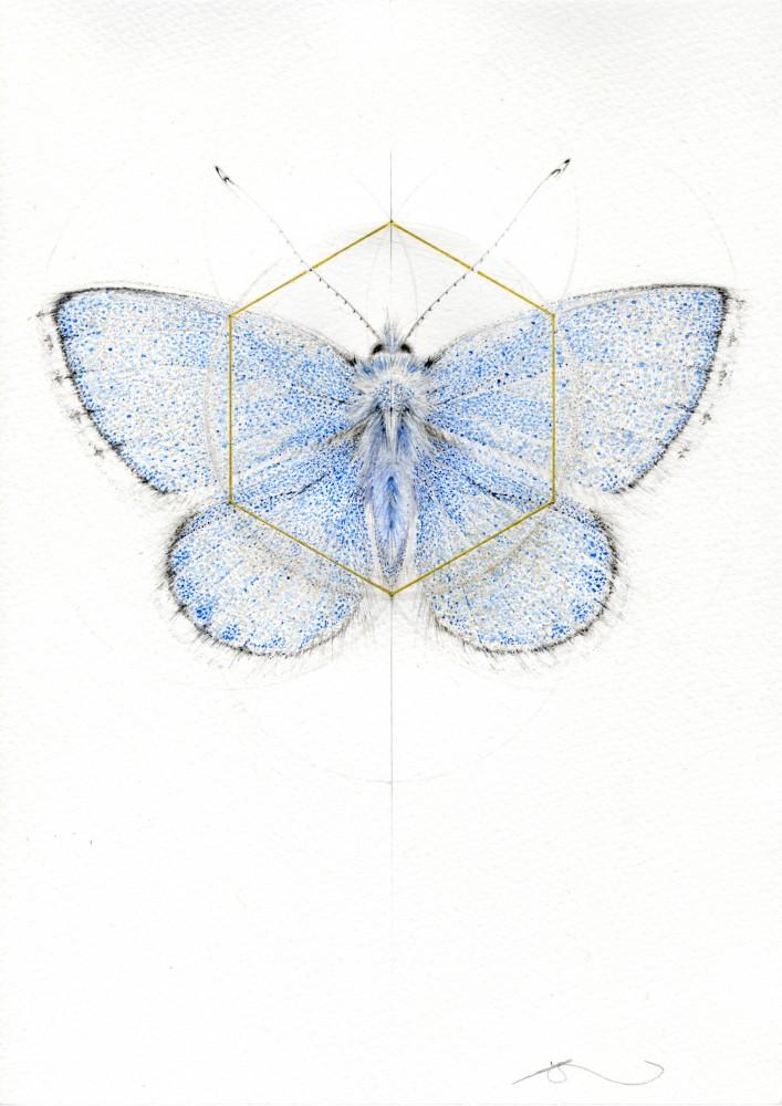 BLUE BUTTERFLY (MEADOW SERIES)