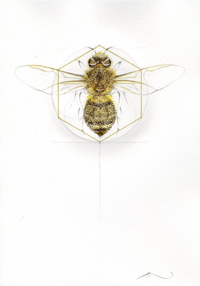 HONEY BEE (MEADOW SERIES)