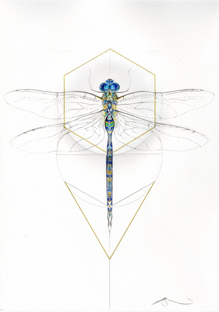 BLUE DRAGONFLY (MEADOW SERIES)