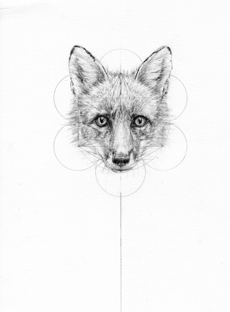 VIXEN (FOX AND THE HARE SERIES)