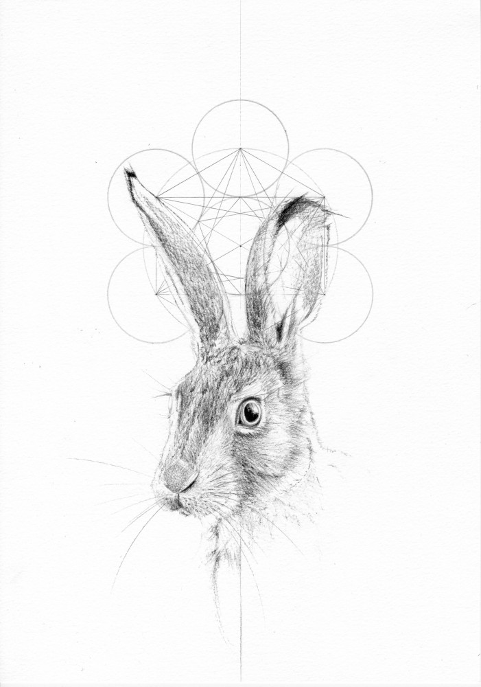 THE SECOND HARE (THE FOX AND THE HARE SERIES)