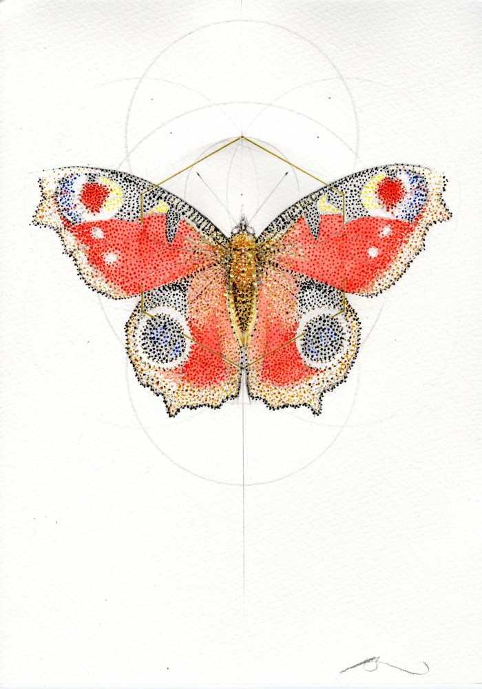 RED PEACOCK BUTTERFLY (MEADOW SERIES)