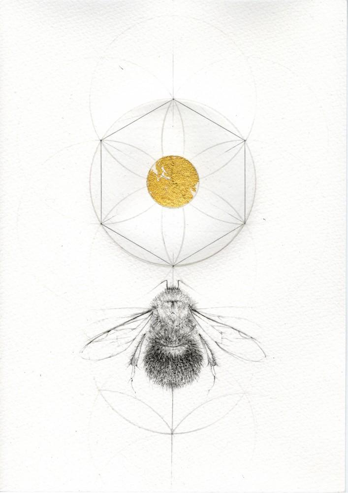 DAISY BEE - BEE STUDIES