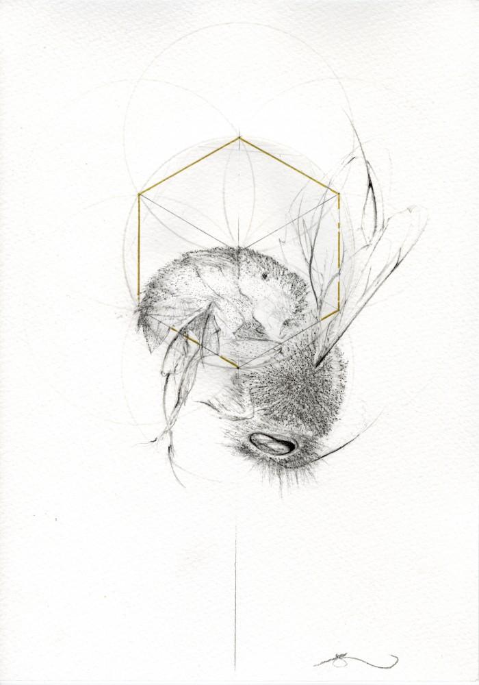 FALLING BEE (BEE STUDIES)